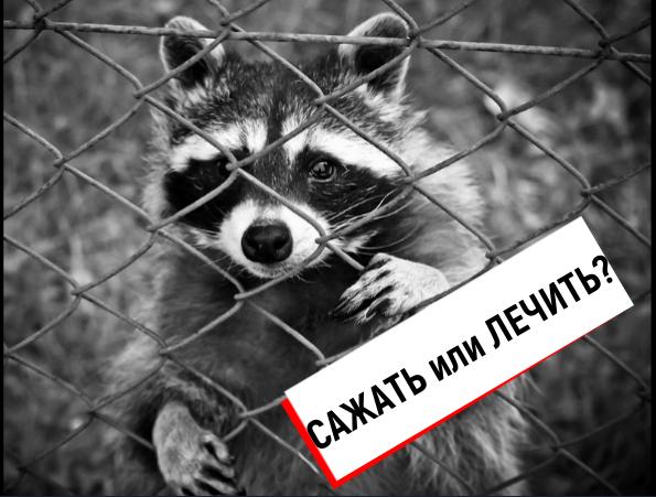 Блог о псевдоэкологах, атакующих Томинский ГОК (РМК): «Сажать лгунью, или всё же лечить?», – вот основные вопросы, требующие прояснения…»